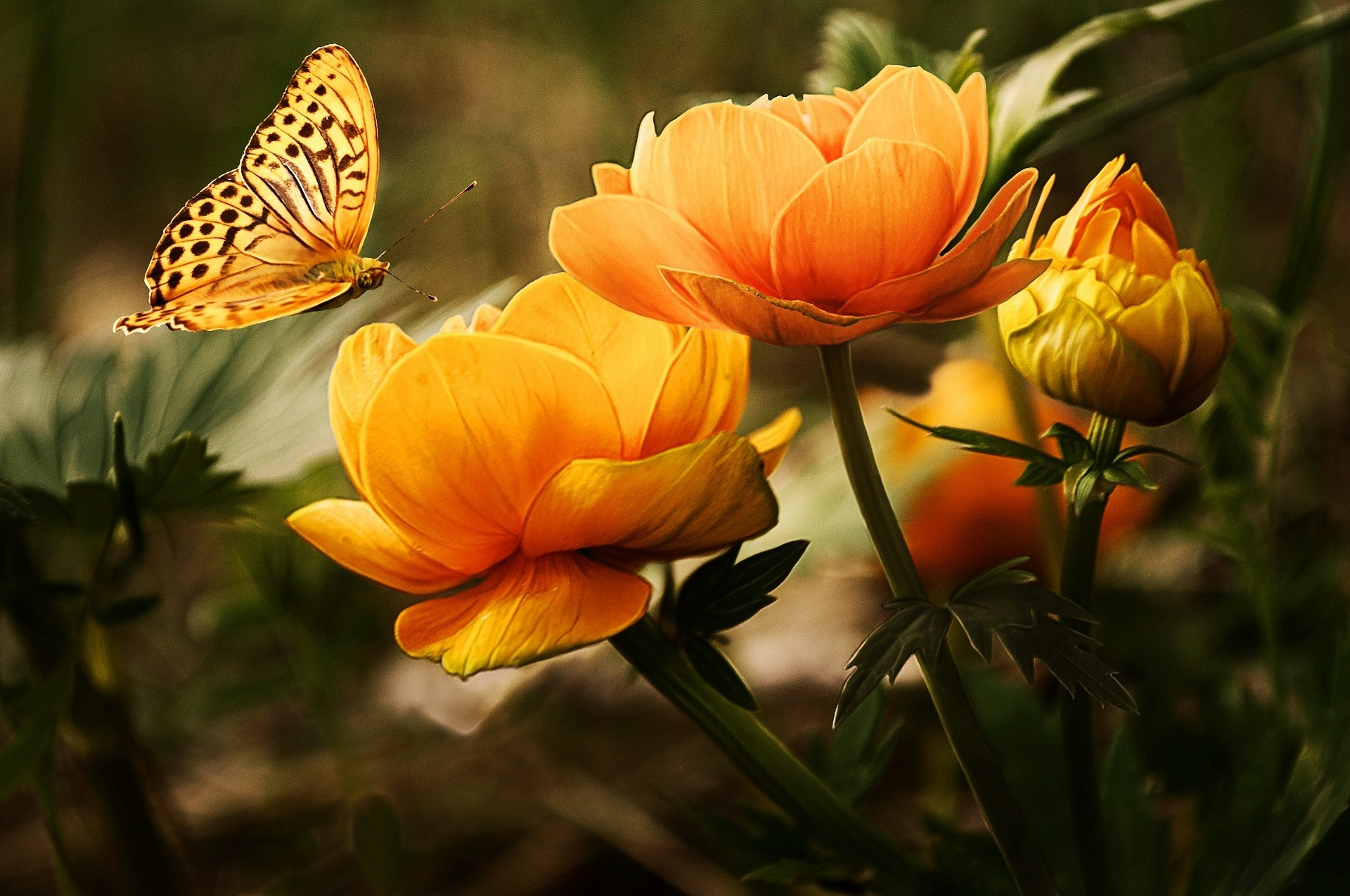 the unique joy a special needs child gives is like the thing of beauty a butterfly becomes